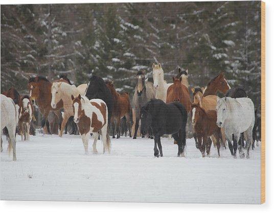 Montana Herd Wood Print