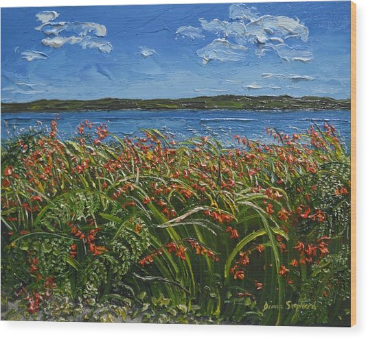 Montbretia Connemara Ireland Wood Print