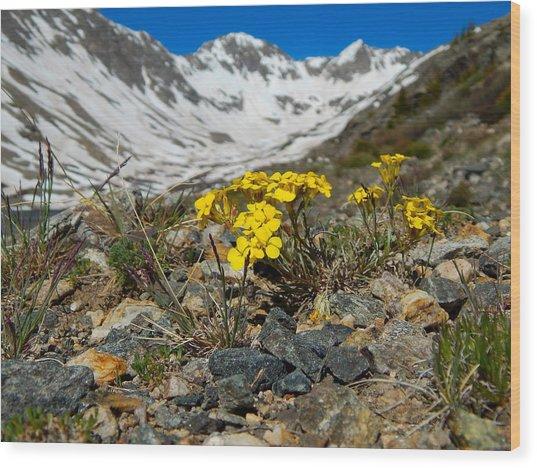 Blue Lakes Colorado Wildflowers Wood Print