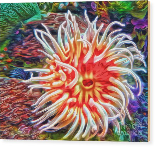 Monterey Bay Aquarium - Anemone Wood Print