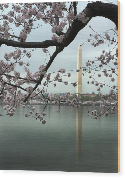 Monumental Blossoms Wood Print by Zachary Hitchcock