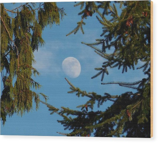 Moon Framed By Trees Wood Print