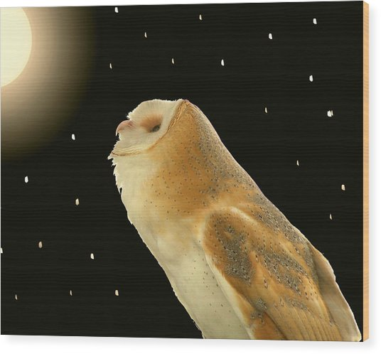 Moon Owl Wood Print
