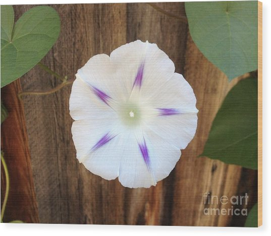 Moonflower On Wood Wood Print by Tayt Dame