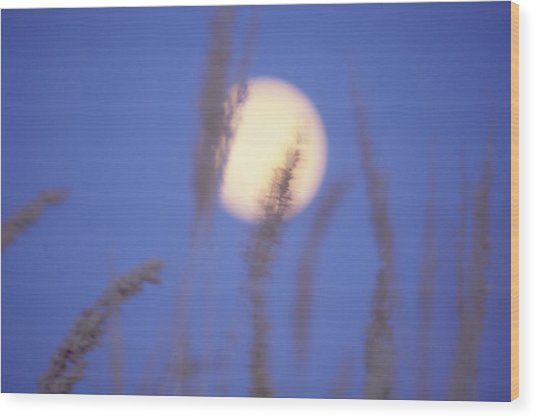Moongrass Wood Print