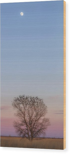 Moonrise Over Blackbirds Wood Print
