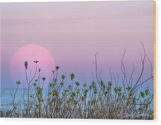 Moonrise Over Dunes Wood Print