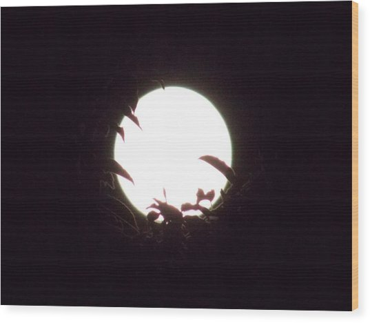 Moonshine 12 The Lonely Beetle Wood Print