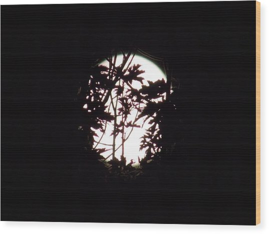 Moonshine 9 Beyond The Forest Wood Print