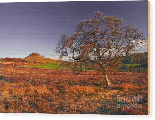 Moorland Tree North Yorkshire Wood Print