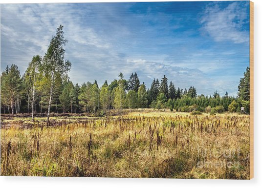 Wetlands In The Black Forest Wood Print