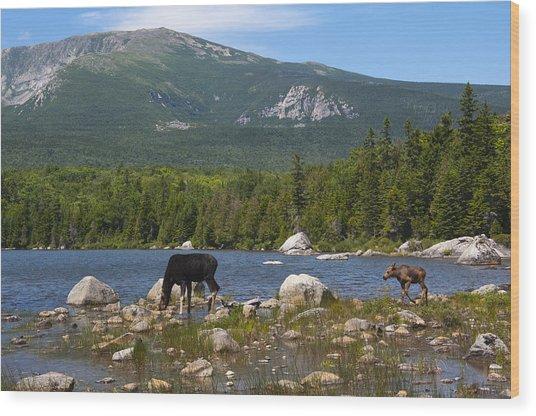 Moose Baxter State Park Maine Wood Print