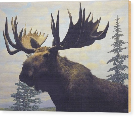 Moose Diorama Wood Print