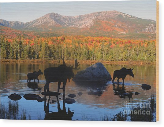 Moose Family Scenic Wood Print