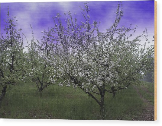 Morning Apple Blooms Wood Print