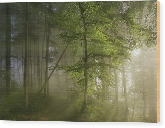 Morning Beauty Wood Print