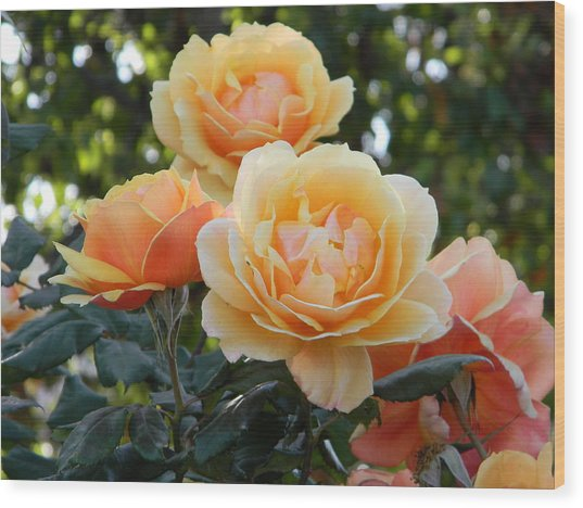 Morning Blooms Wood Print