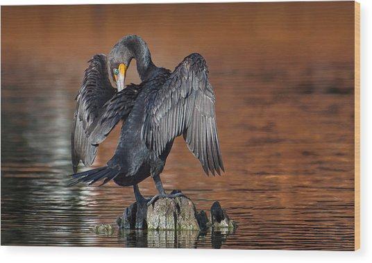 Morning Cormorant Wood Print by David Bond