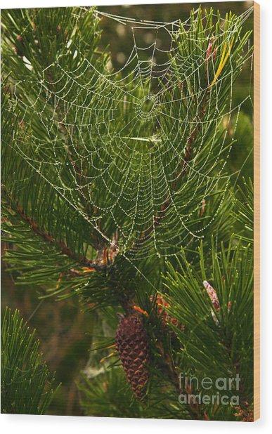 Morning Dew On Cobweb Wood Print