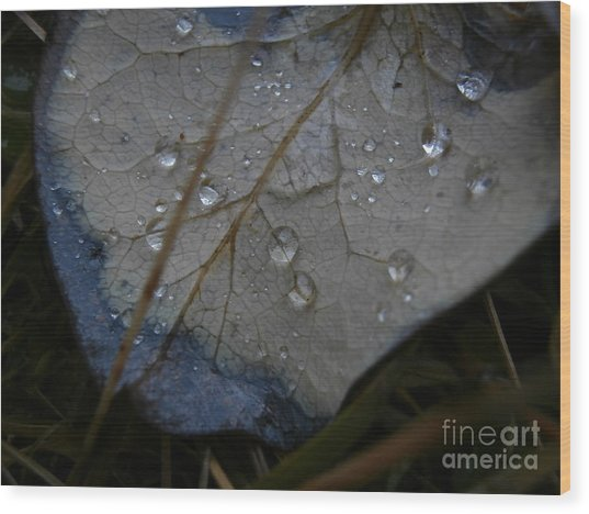 Morning Dew Wood Print by Steven Valkenberg