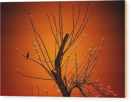 Morning Dove Sunrise Wood Print