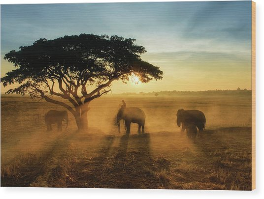Morning Elephant Home Town Wood Print by Saravut  Whanset