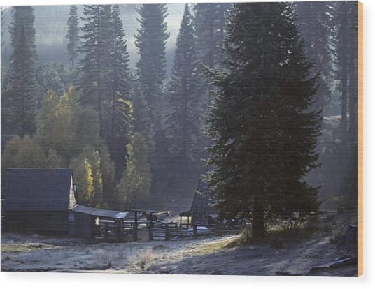 Wood Print featuring the photograph Morning Frost At Dawn by David Bailey