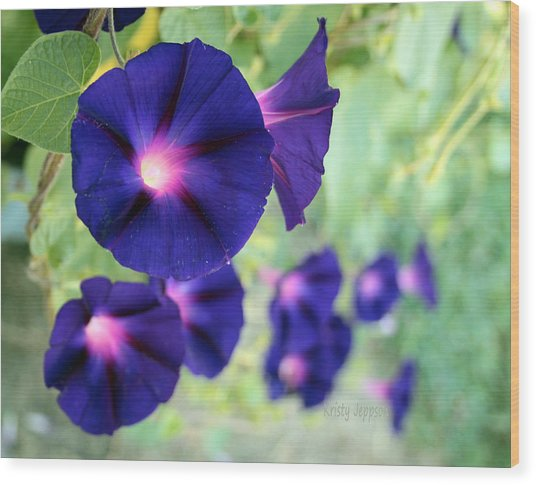 Morning Glory Climbing Wood Print