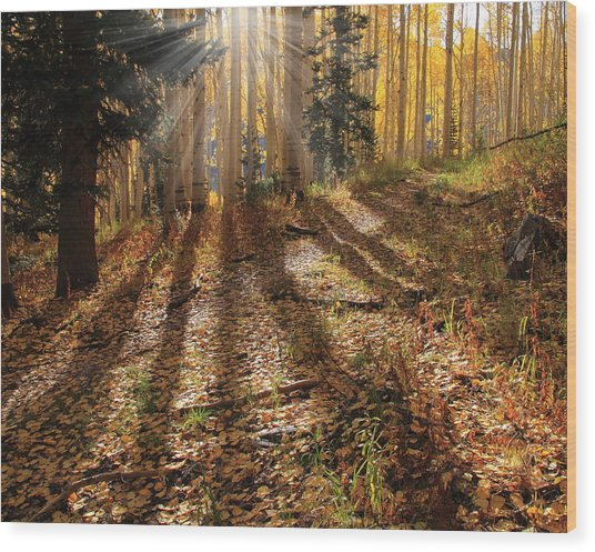 Morning Glory Wood Print by Gene Praag