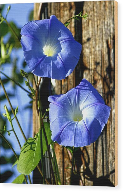 Morning Glory Pair Wood Print