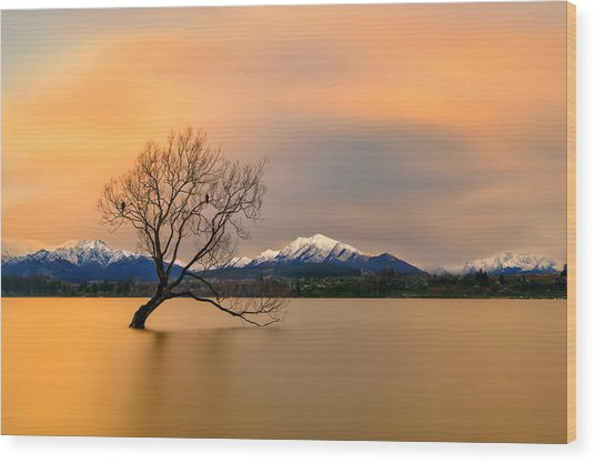 Morning Glow Of The Lake Wanaka Wood Print