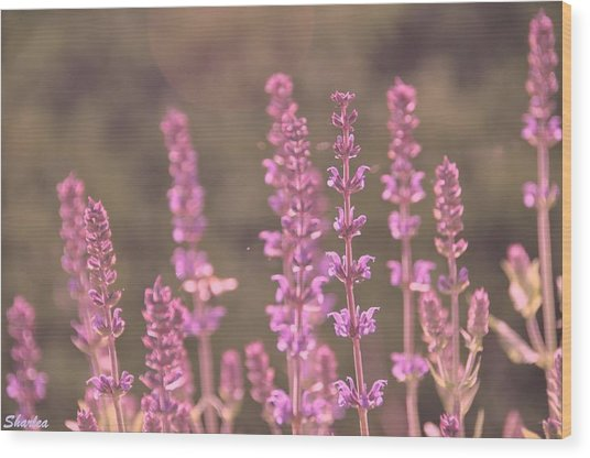 Morning In Pink Wood Print