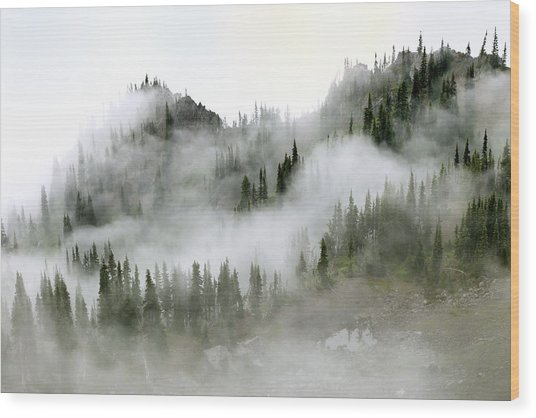 Morning Mist In Olympic National Park Wood Print