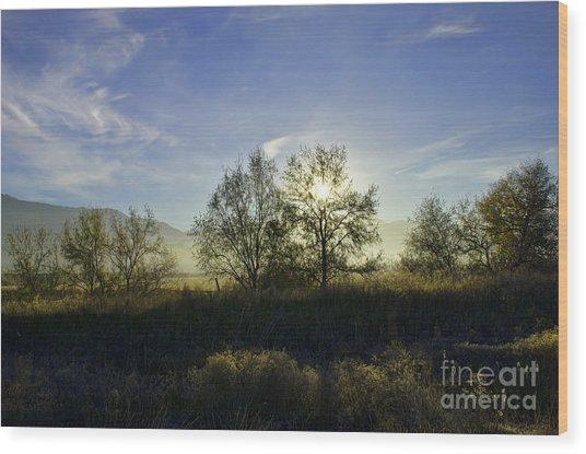 Morning Sun  Wood Print by Nicole Markmann Nelson