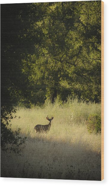 Wood Print featuring the photograph Morning Visitor 2 by Sherri Meyer