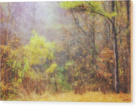 Landscape - Trees - Morning Walk In The Woods Wood Print by Barry Jones