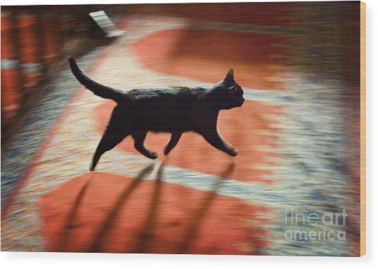 Mosque Cat Wood Print