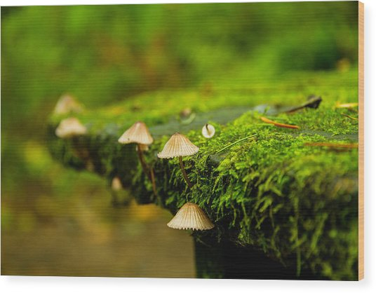 Moss Close-up Wood Print