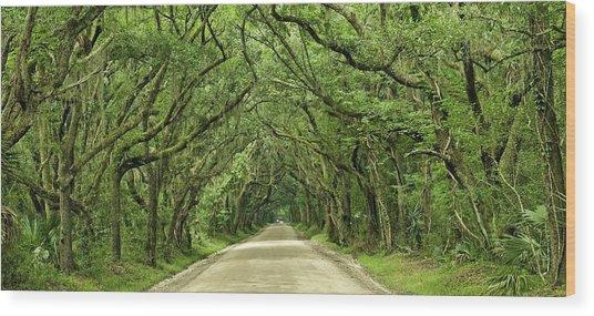 Moss Covered Trees On Botany Bay Road  Edisto Island Sc Wood Print