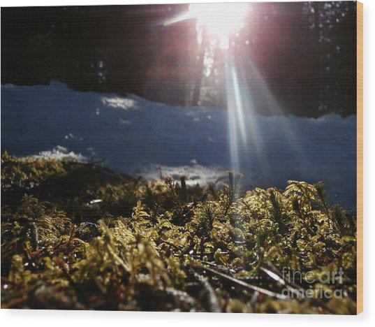 Moss In The Sunlight Wood Print by Steven Valkenberg