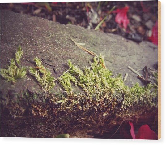 Moss Wood Print by Laura Mazzuca