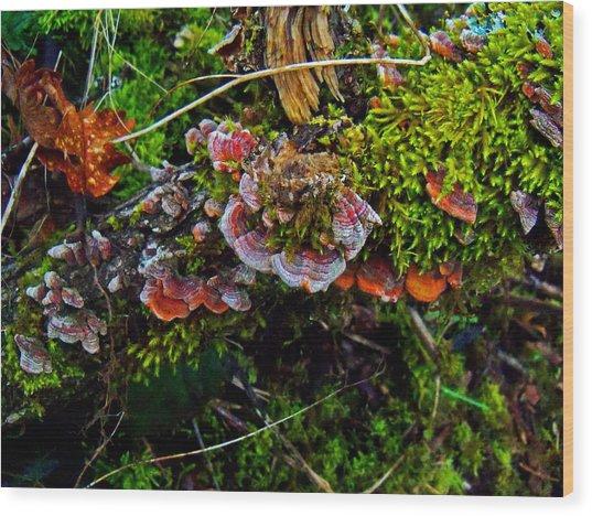 Moss Mushrooms And Knocks Wood Print