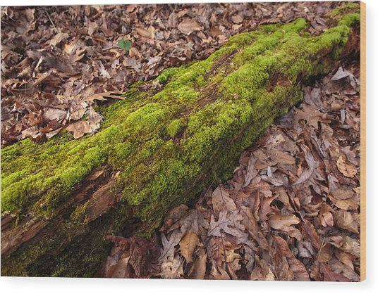 Moss On Pine Wood Print