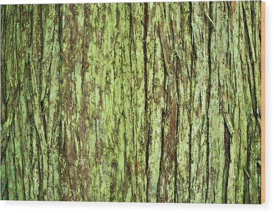 Moss On Tree Bark Wood Print