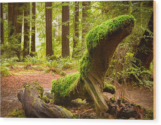 Mossy Creature Wood Print