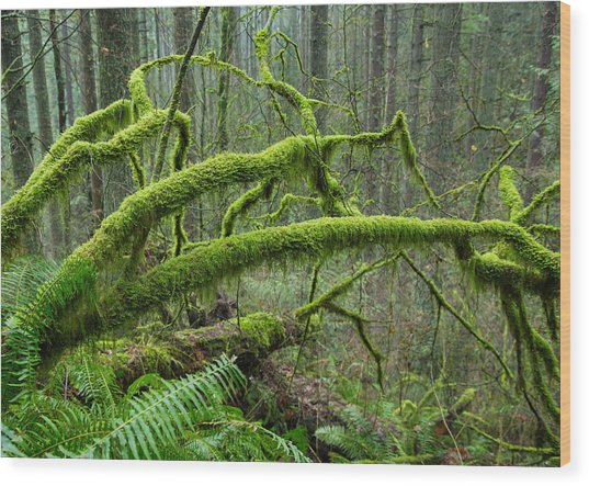 Mossy Dreamland Wood Print