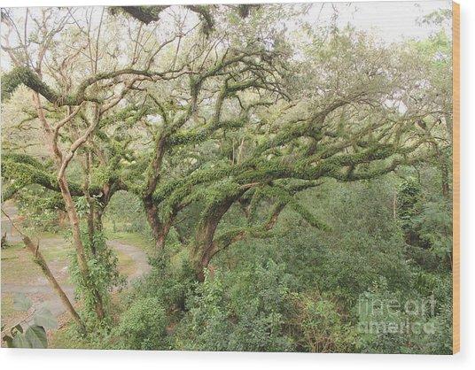 Mossy Oak Wood Print by Joseph Williams