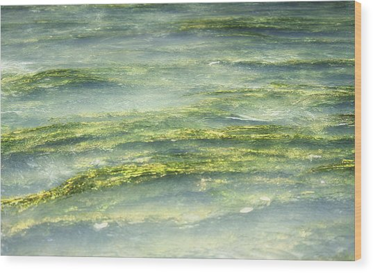 Mossy Tranquility Wood Print