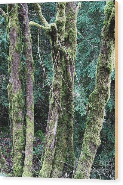 Mossy Trees Wood Print