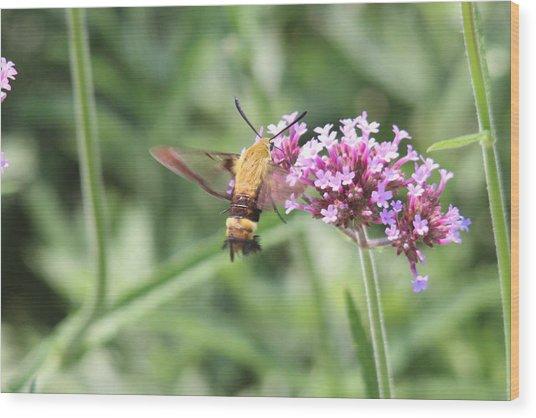 Moth On Flowers Wood Print by Jill Bell